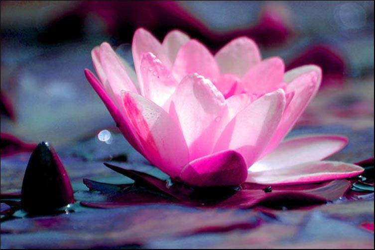 1801-158-146-photo-Eric-Comandini-abstrait-naturel-fleurs-couleurs